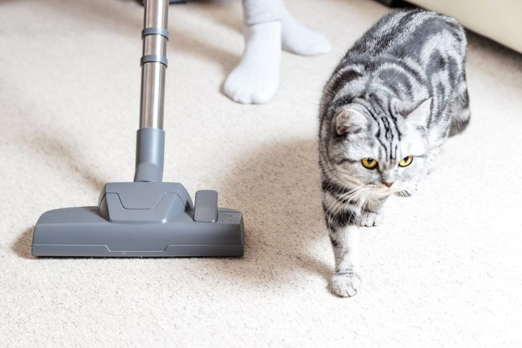 7 Most Effective Vacuums for Cat Litter — Take Care of Both Your House and Furry Friend!