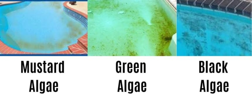 How to Get Algae Out of a Pool Without a Vacuum