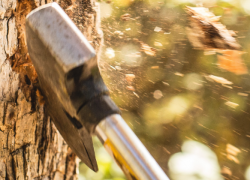 6 Slashiest Felling Axes For Traditional Tree Chopping