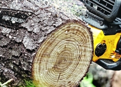 10 Easy-To-Handle Small Chainsaws – Compact Helper For Everyday Tasks