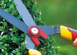 7 Sharpest Hedge Shears to Save You Time and Effort in the Garden